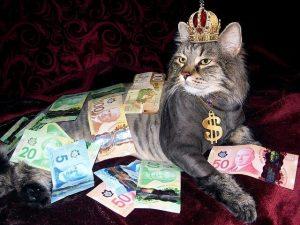 お金持ちの猫